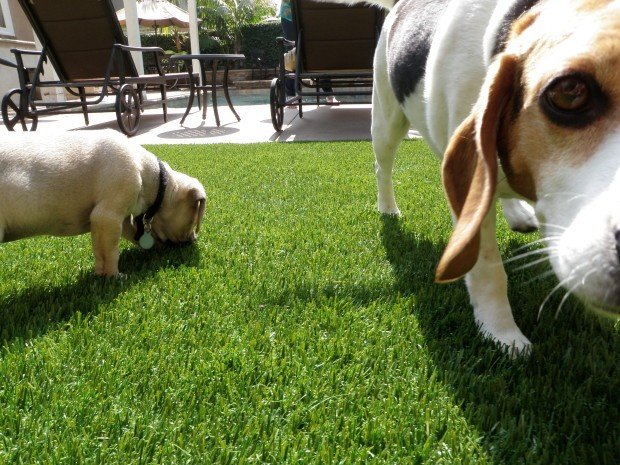 Synthetic Pet Turf Company Chula Vista, Artificial Pet Grass Backyard Installation