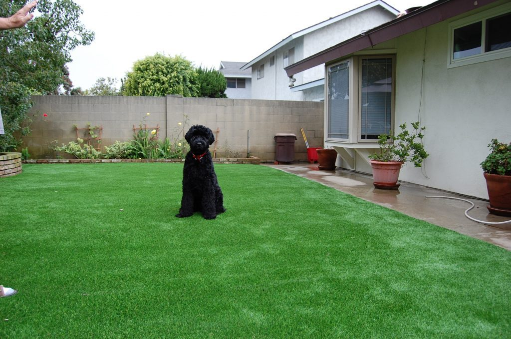 Synthetic Lawn Pet Turf Chula Vista, Top Rated Artificial Grass Installation for Dogs