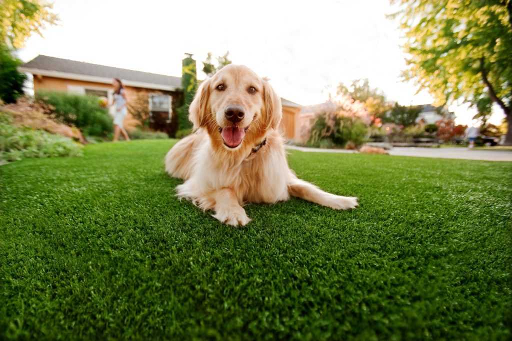 Synthetic Grass For Dogs Chula Vista, Artificial Lawn Dog Run Installation